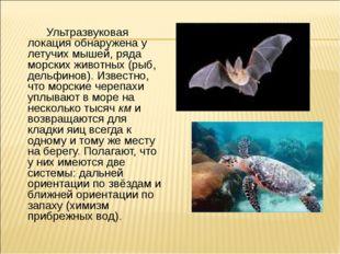 Ультразвуковая локация обнаружена у летучих мышей, ряда морских животных (ры