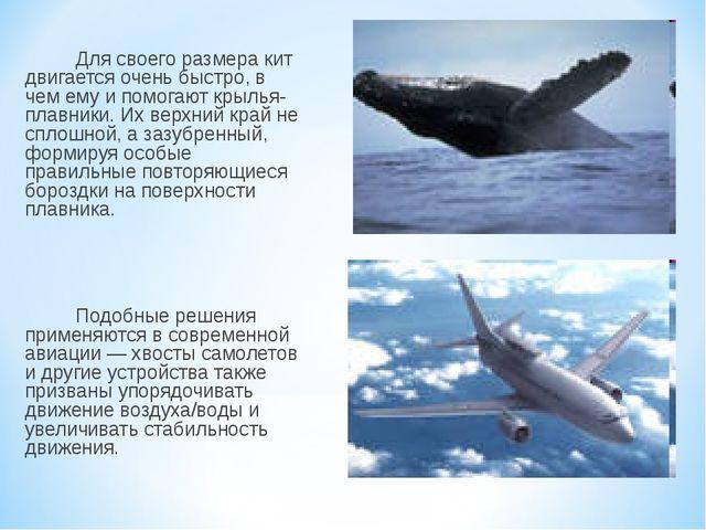 Для своего размера кит двигается очень быстро, в чем ему и помогают крылья-п...