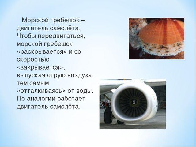 Морской гребешок – двигатель самолёта. Чтобы передвигаться, морской гребешок...