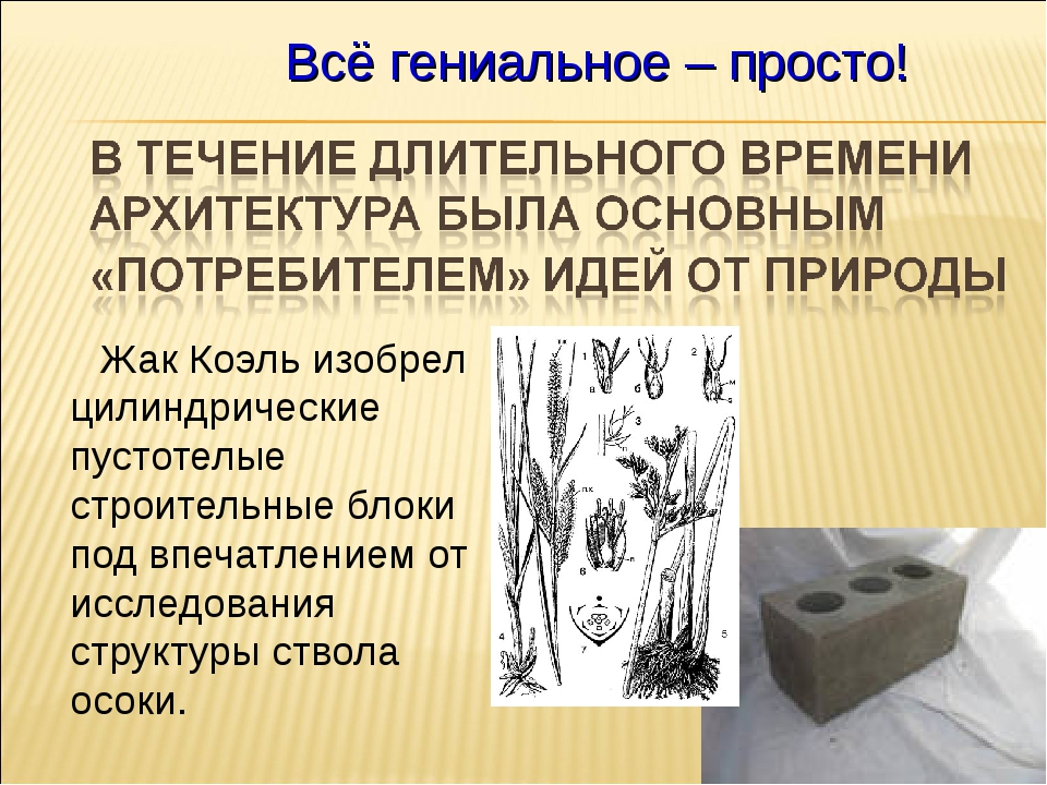 Жак Коэль изобрел цилиндрические пустотелые строительные блоки под впечатлен...