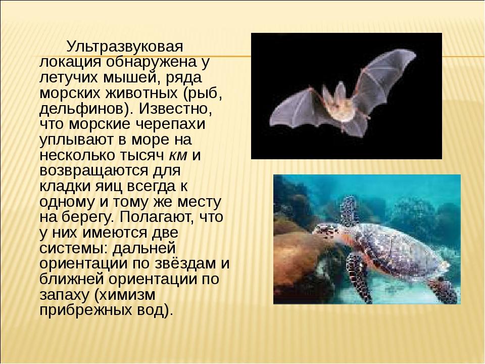 Ультразвуковая локация обнаружена у летучих мышей, ряда морских животных (ры...
