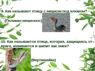 9. Как называют птицу с мешком под клювом? (Пеликан-мешконос) 10. Как называе