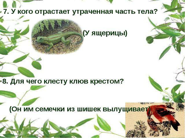 7. У кого отрастает утраченная часть тела? (У ящерицы) 8. Для чего клесту клю...