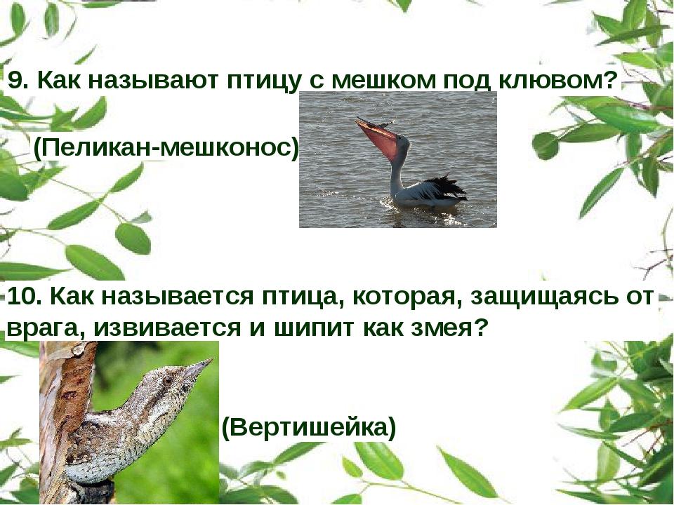 9. Как называют птицу с мешком под клювом? (Пеликан-мешконос) 10. Как называе...