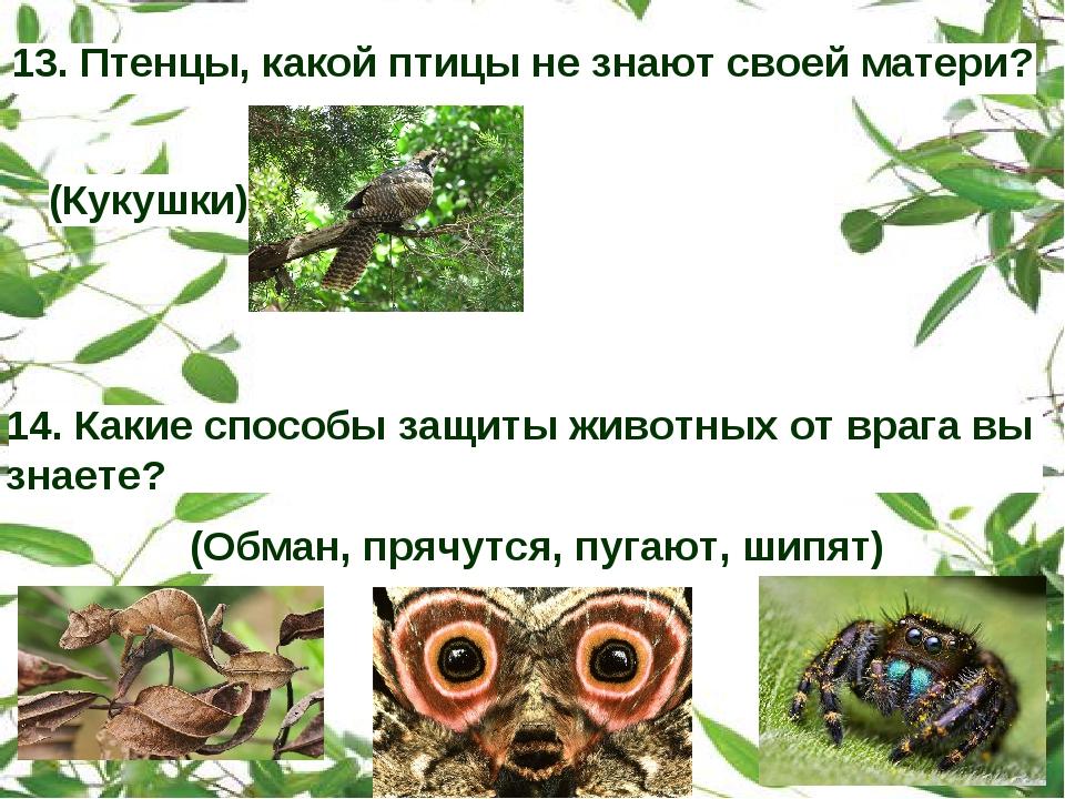14. Какие способы защиты животных от врага вы знаете? 13. Птенцы, какой птицы...