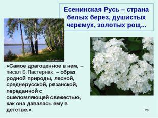 * Есенинская Русь – страна белых берез, душистых черемух, золотых рощ... «Сам