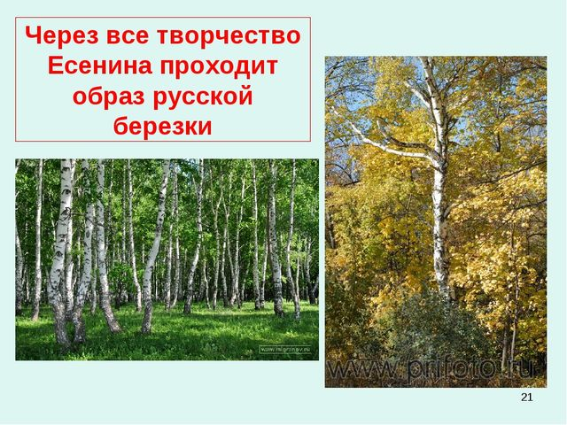 * Через все творчество Есенина проходит образ русской березки