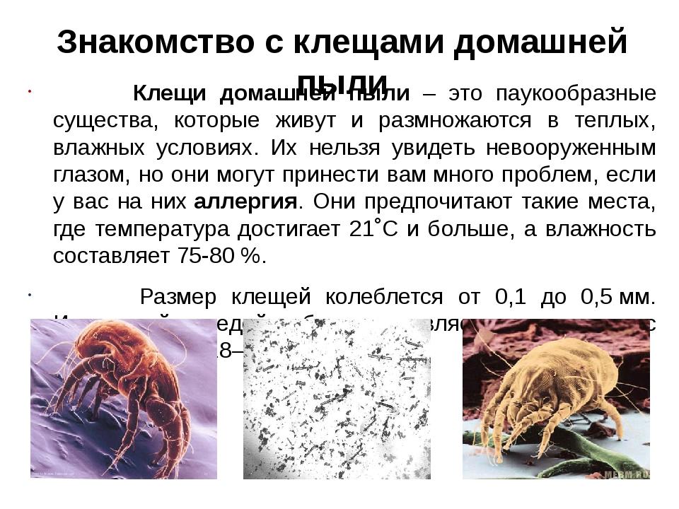 Клещи домашней пыли – это паукообразные существа, которые живут и размножают...