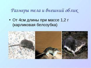 Размеры тела и внешний облик От 4см длины при массе 1,2 г (карликовая белозуб