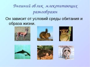 Внешний облик млекопитающих разнообразен Он зависит от условий среды обитания