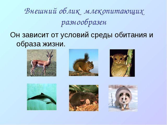 Внешний облик млекопитающих разнообразен Он зависит от условий среды обитания...