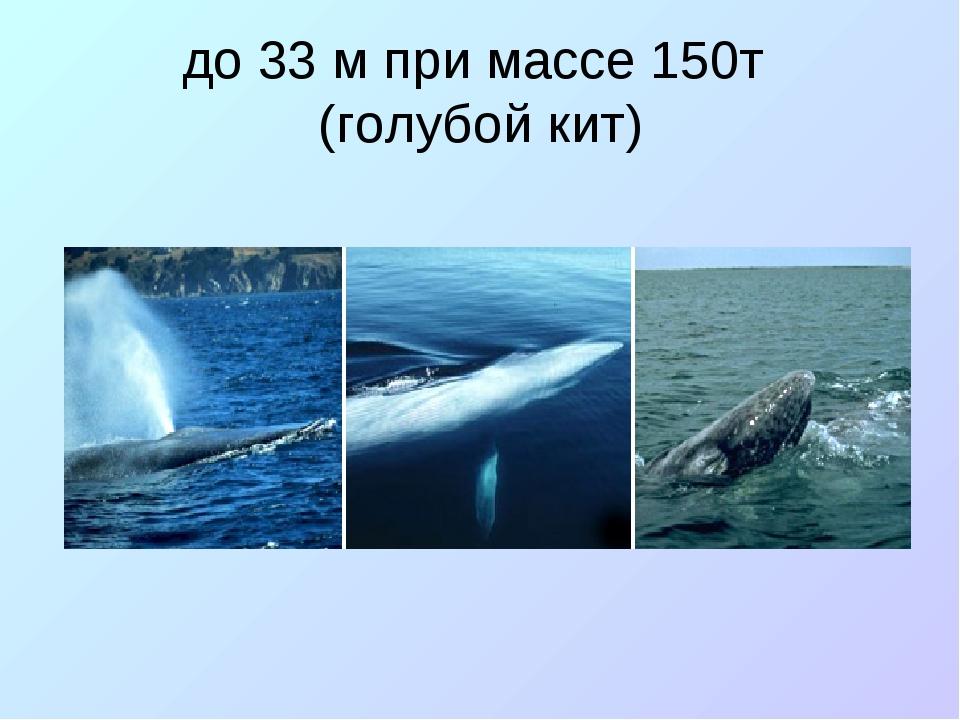 до 33 м при массе 150т (голубой кит)