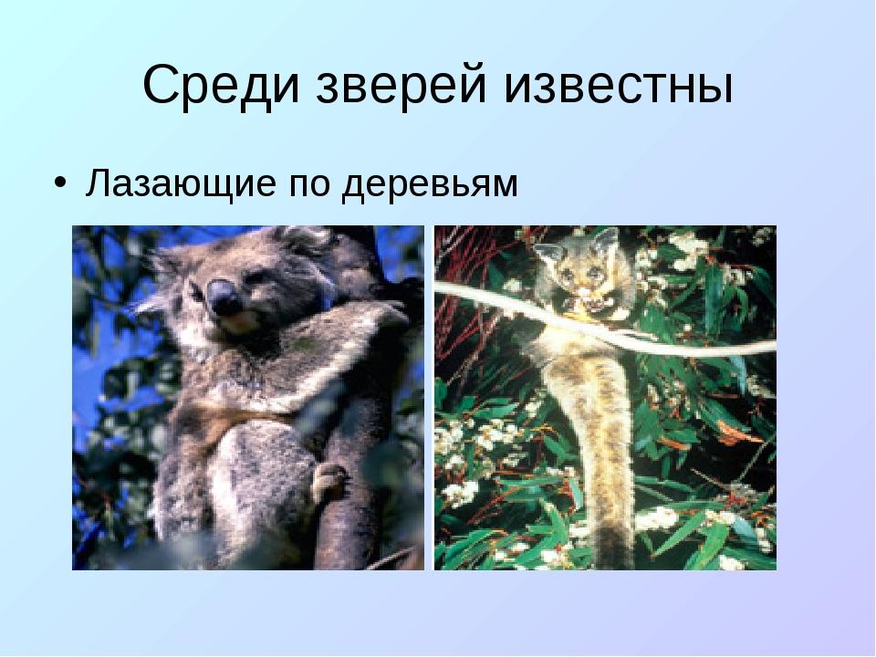 Среди зверей известны Лазающие по деревьям