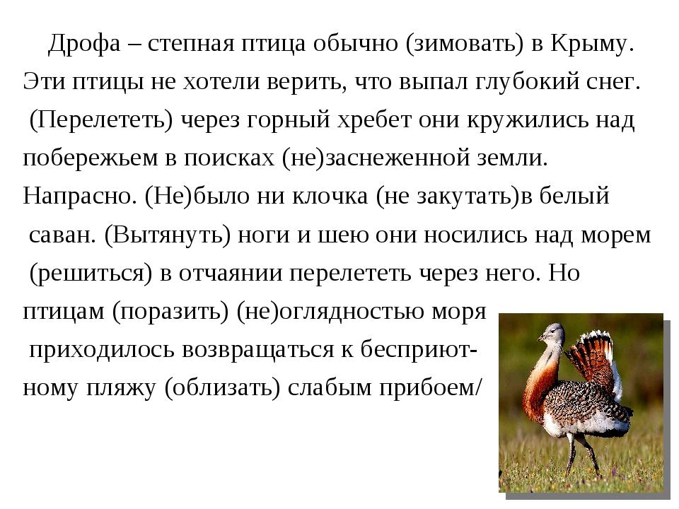 Дрофа – степная птица обычно (зимовать) в Крыму. Эти птицы не хотели верить,...