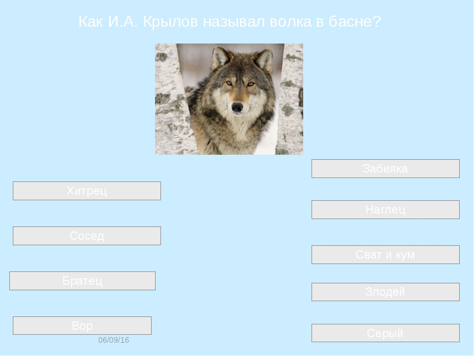 Как И.А. Крылов называл волка в басне? Серый Сват и кум Хитрец Забияка Сосед...