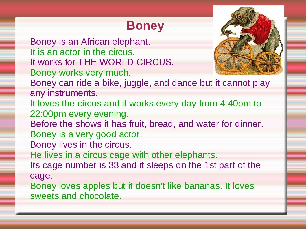 Boney is an African elephant. It is an actor in the circus. It works for THE...