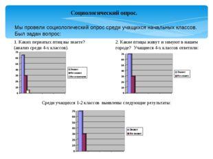 Социологический опрос. Мы провели социологический опрос среди учащихся началь