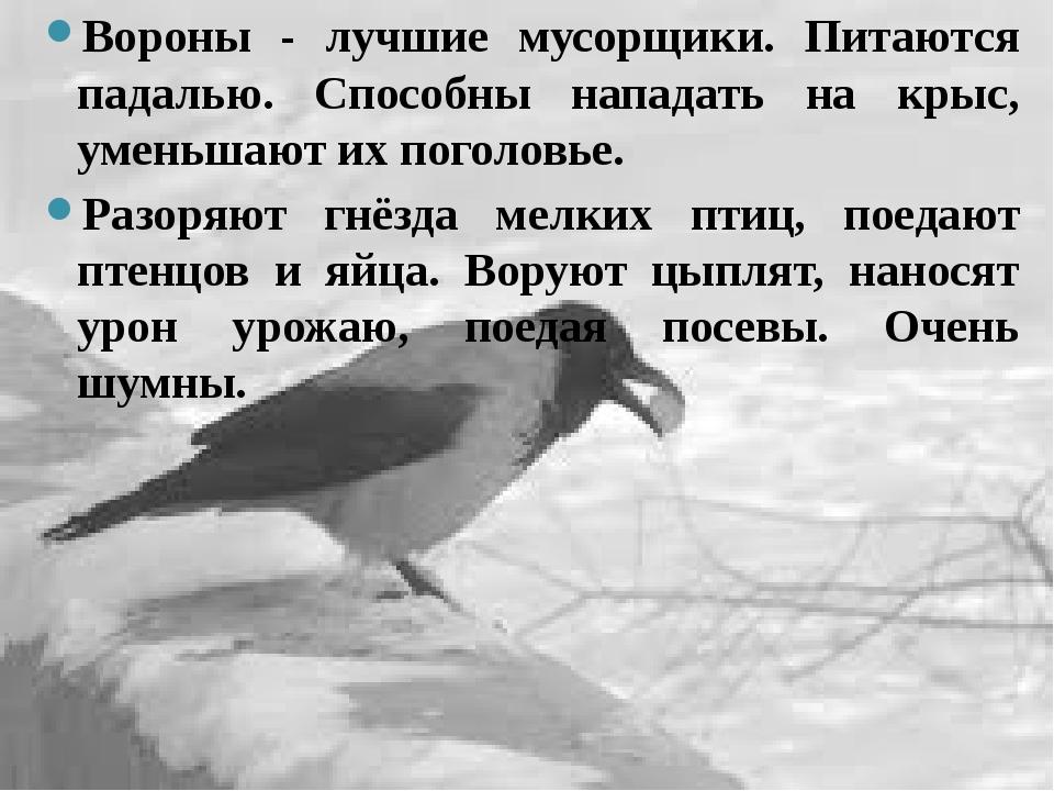Вороны - лучшие мусорщики. Питаются падалью. Способны нападать на крыс, умень...
