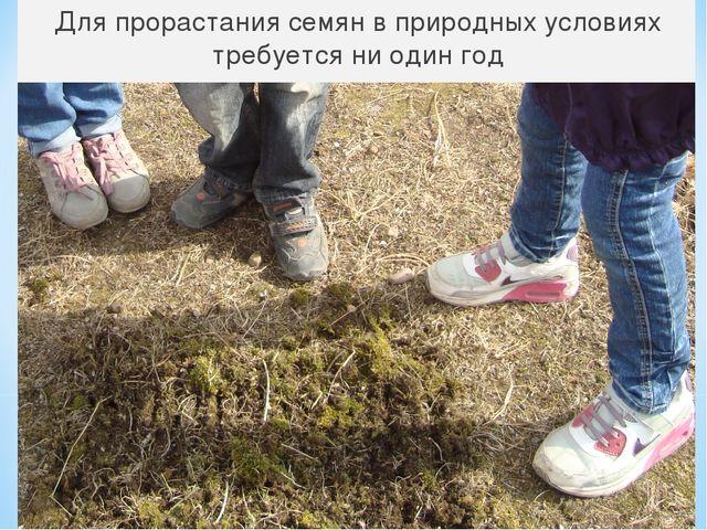 Для прорастания семян в природных условиях требуется ни один год
