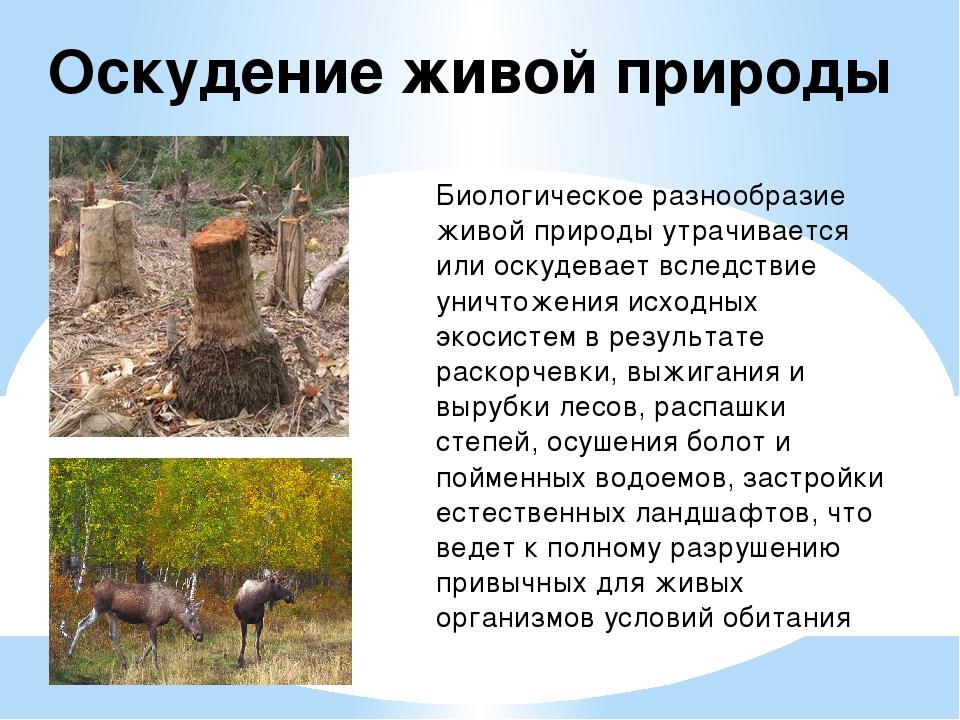 Оскудение живой природы Биологическое разнообразие живой природы утрачивается...
