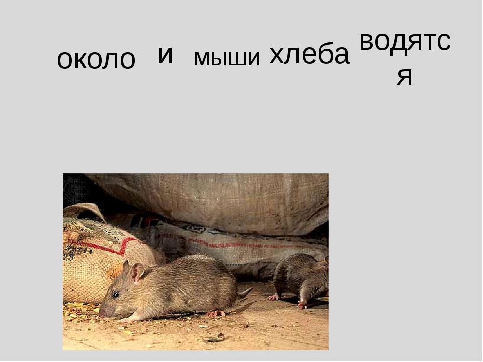 около и мыши хлеба водятся