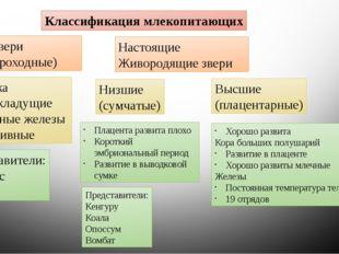 Классификация млекопитающих Первозвери (Однопроходные) Клоака Яйцекладущие Мл