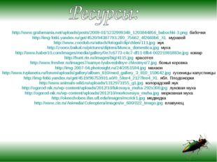 http://www.grafamania.net/uploads/posts/2009-01/1232999348_1203844856_babochk