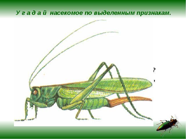 У г а д а й насекомое по выделенным признакам. Летает, бегает, прыгает, плава...