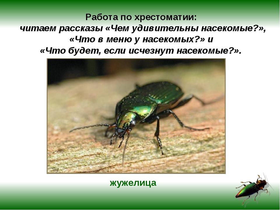 Работа по хрестоматии: читаем рассказы «Чем удивительны насекомые?», «Что в м...