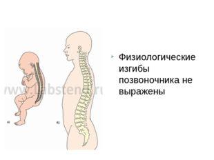 Физиологические изгибы позвоночника не выражены