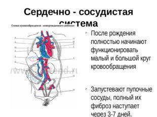 Сердечно - сосудистая система После рождения полностью начинают функционирова