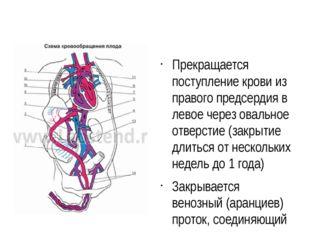 Прекращается поступление крови из правого предсердия в левое через овальное