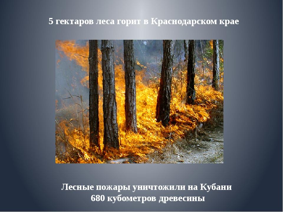 Лесные пожары уничтожили на Кубани 680 кубометров древесины 5 гектаров леса...