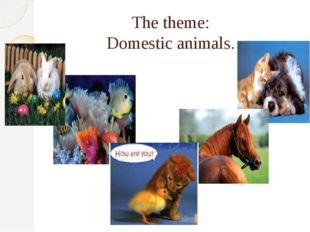The theme: Domestic animals.