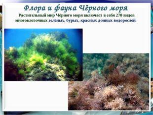 Флора и фауна Чёрного моря * Растительный мир Чёрного моря включает в себя 27