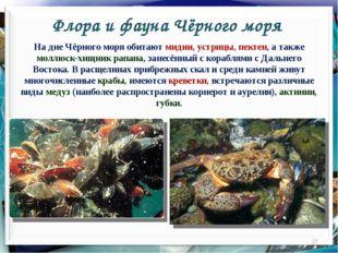Флора и фауна Чёрного моря * На дне Чёрного моря обитают мидии, устрицы, пект