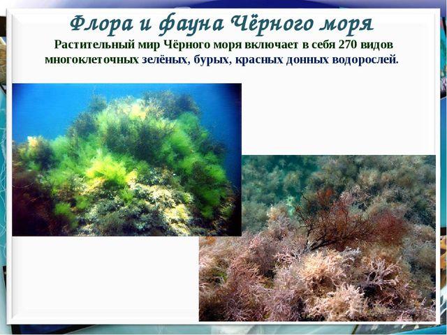 Флора и фауна Чёрного моря * Растительный мир Чёрного моря включает в себя 27...