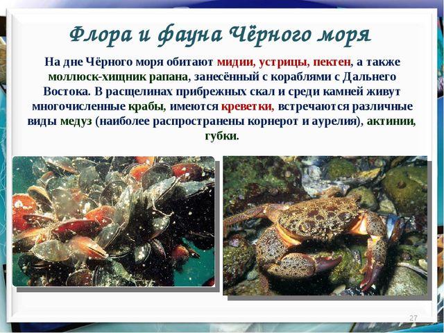 Флора и фауна Чёрного моря * На дне Чёрного моря обитают мидии, устрицы, пект...