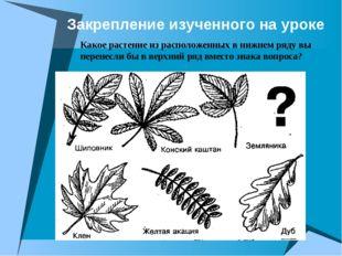 Закрепление изученного на уроке Какое растение из расположенных в нижнем ряду