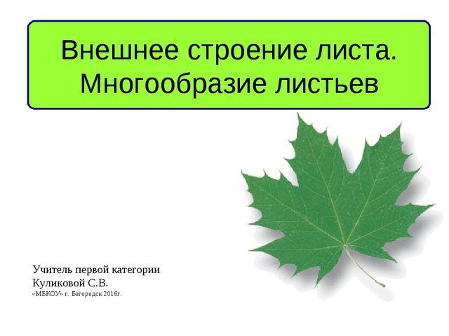 Внешнее строение листа. Многообразие листьев Учитель первой категории Куликов...