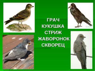 ГРАЧ КУКУШКА СТРИЖ ЖАВОРОНОК СКВОРЕЦ