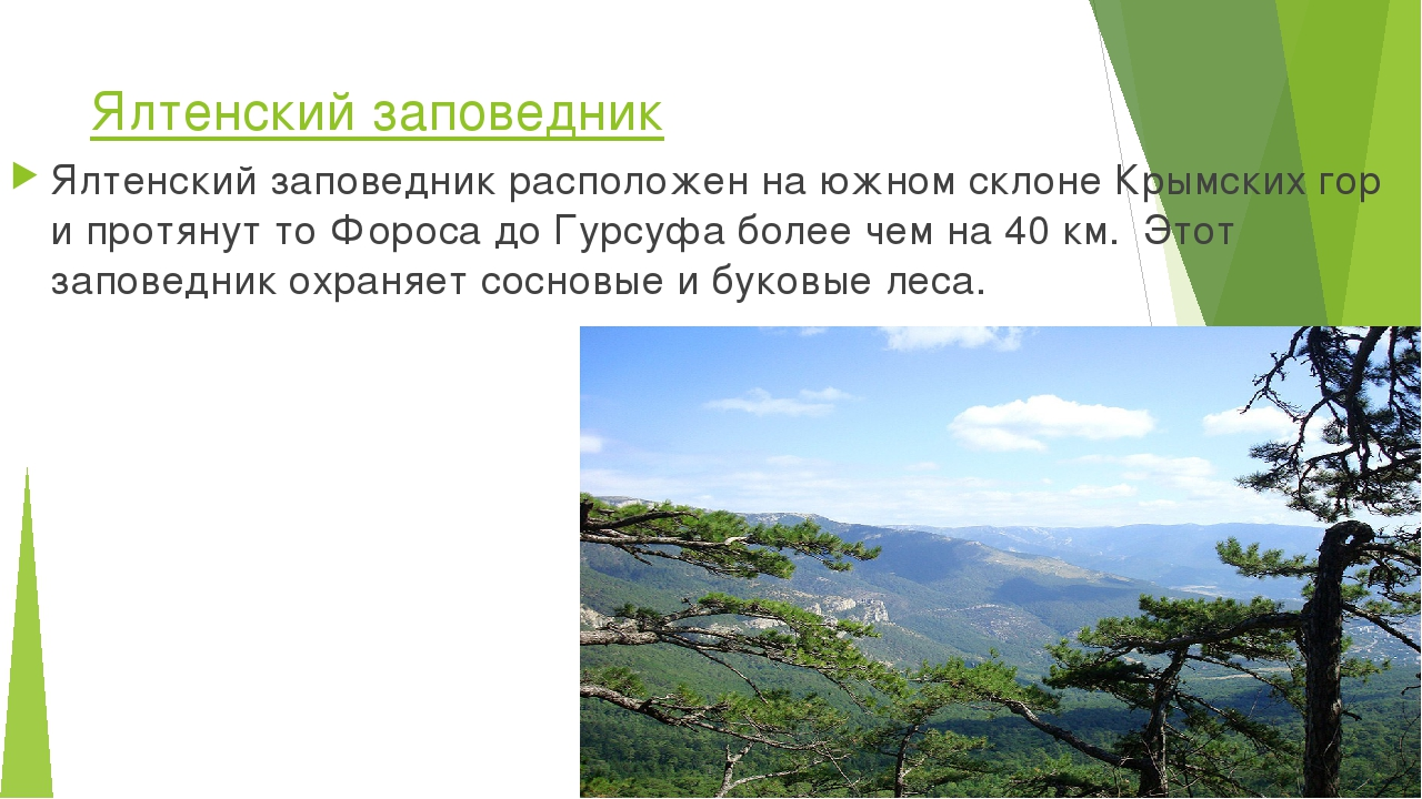 Ялтенский заповедник Ялтенский заповедник расположен на южном склоне Крымских...