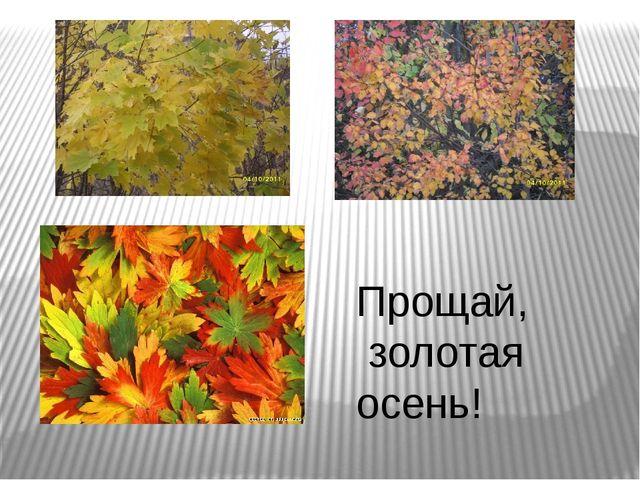 Прощай, золотая осень!