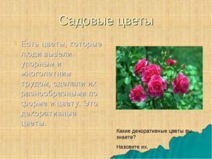 Садовые цветы Есть цветы, которые люди вывели упорным и многолетним трудом, с