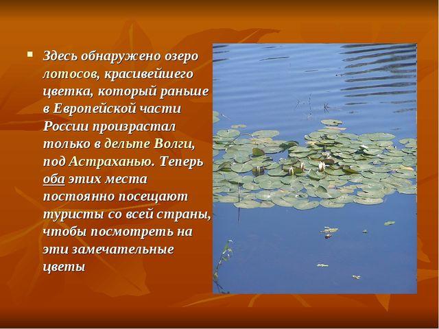 Здесь обнаружено озеро лотосов, красивейшего цветка, который раньше в Европей...