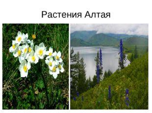 Растения Алтая