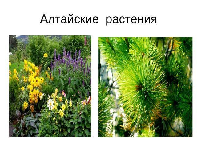 Алтайские растения