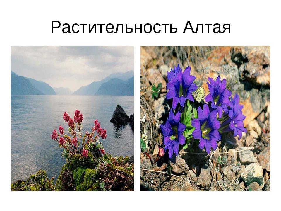Растительность Алтая