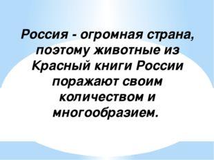 Россия - огромная страна, поэтому животные из Красный книги России поражают