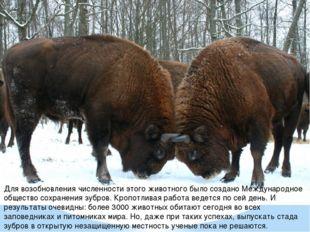 Для возобновления численности этого животного было создано Международное обще